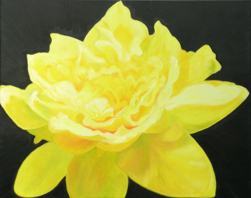 daffodill-spring-equinox