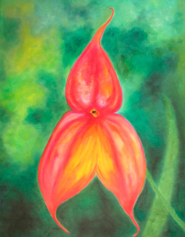 orchid-masdevailia-veitchina0014