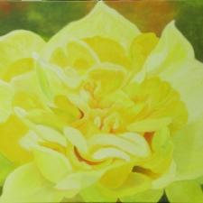 daffodill03