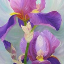 Iris - Bird of Paradise