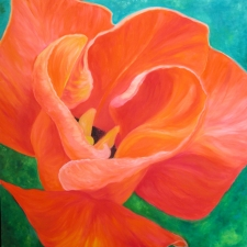 orangetulipbud