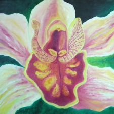 Orchid - Cmbidium