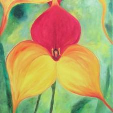 Orchid - Masdevalia