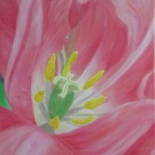 tulippinkcloseup