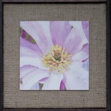 magnolia-1-2